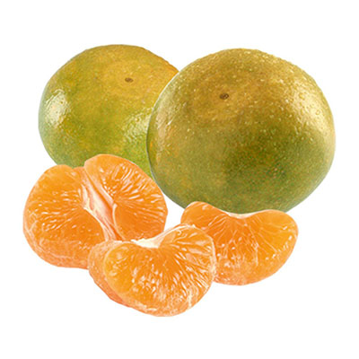 Fresh Nagpur Orange for IQF Frozen Nagpur Orange Segments